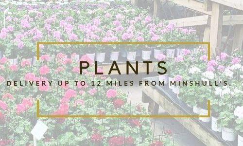 Minshull's Plants