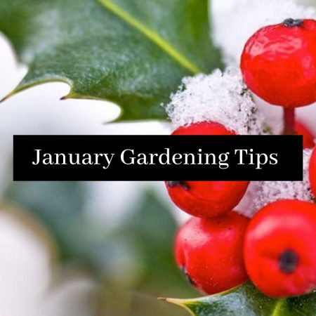 Minshull's January Gardening Tips