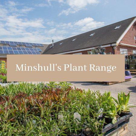 Minshull's Plant Range